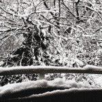 雪だけは勘弁な